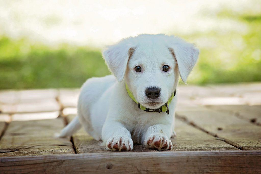 לבעלי כלבים ציוד בסיסי שכל בעל כלב צריך