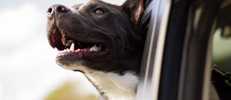 לבעלי כלבים: ציוד בסיסי שכל בעל כלב צריך